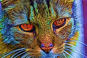 watercolorcat