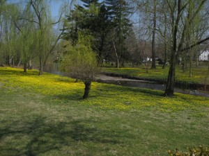 "A northern NJ park covered in yellow ""dust""."